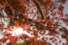 Colores de la primavera Imagen de archivo libre de regalías