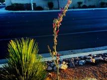 Colores de la puesta del sol Fotografía de archivo libre de regalías
