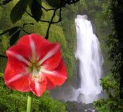 Colores de la selva Imágenes de archivo libres de regalías