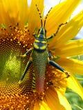 Colores de las naturalezas Imagen de archivo