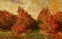 Colores de las naturalezas foto de archivo