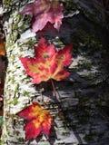 Colores de New Hampshire Imagenes de archivo