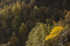 Colores de oro del otoño del abedul y del helecho Foto de archivo libre de regalías