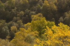 Colores de oro del otoño del abedul y del helecho Fotografía de archivo
