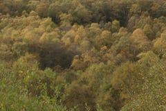 Colores de oro del otoño del abedul y del helecho Foto de archivo
