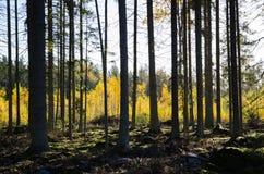 Colores de oro en el bosque Imagenes de archivo