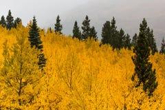 Colores de oro de la caída Imagen de archivo libre de regalías