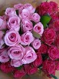 Colores de rosa preciosos Imágenes de archivo libres de regalías