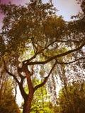 Colores de un árbol Imagen de archivo