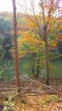 Colores del árbol de la caída Foto de archivo libre de regalías