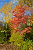 Colores del árbol del follaje de otoño contra el cielo azul Foto de archivo libre de regalías