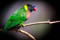 Colores del arco iris Imagen de archivo