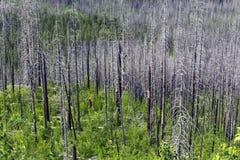Colores del bosque Fotos de archivo