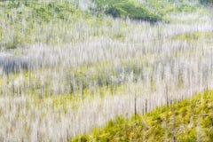 Colores del bosque Fotos de archivo libres de regalías