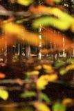 Colores del bosque Imágenes de archivo libres de regalías