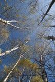 Colores del follaje del otoño Imágenes de archivo libres de regalías