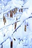 Colores del invierno Fotografía de archivo