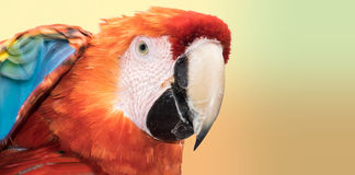 Colores del Macaw Imagenes de archivo