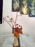 Colores del neutral de Aureafolia del Bauhinia fotografía de archivo