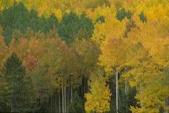 Colores del otoño 272-3-3 Foto de archivo libre de regalías