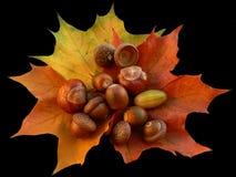 Colores del otoño Fotografía de archivo libre de regalías