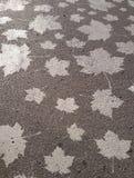 Colores 9 del otoño Foto de archivo