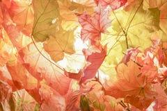 Colores 9 del otoño Fotografía de archivo libre de regalías