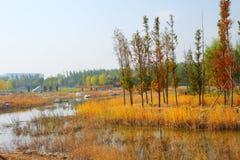 Colores del otoño fotografía de archivo