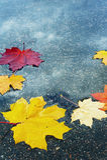 Colores 9 del otoño Foto de archivo libre de regalías