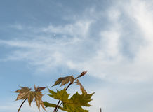 Colores 9 del otoño Imagen de archivo libre de regalías