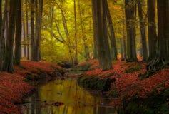 Colores del otoño del bosque Fotografía de archivo libre de regalías