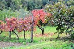 Colores del otoño de Koper Eslovenia fotografía de archivo