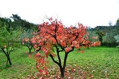 Colores del otoño de Koper Eslovenia fotos de archivo