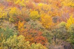 Colores del otoño de las coronas del árbol Fotos de archivo