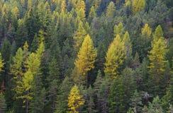 Colores del otoño del bosque Foto de archivo libre de regalías