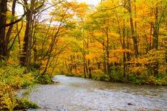Colores del otoño del río de Oirase Imagenes de archivo