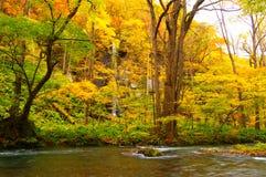 Colores del otoño del río de Oirase Fotos de archivo