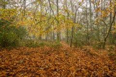 Colores del otoño en bosque en sol y niebla de la mañana Imagen de archivo