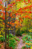 Colores del otoño en Canadá Fotos de archivo