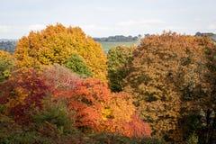 Colores del otoño en el arboreto de Winkworth Fotos de archivo