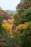 Colores del otoño en el arboreto de Winkworth Imagenes de archivo
