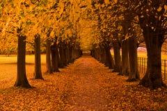 Colores del otoño en el bosque imágenes de archivo libres de regalías