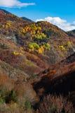 Colores del otoño en el bosque Fotografía de archivo libre de regalías