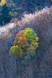 Colores del otoño en el bosque Foto de archivo libre de regalías