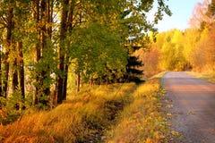 Colores del otoño en Finlandia 4 Foto de archivo libre de regalías
