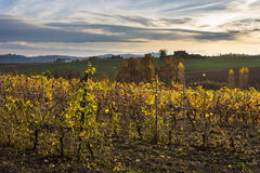 Colores del otoño en las colinas de Monferrato en la puesta del sol Piamonte, Italia Imagen de archivo