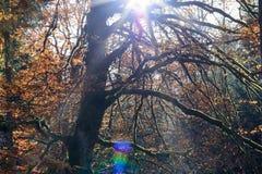 Colores del otoño en las montañas Imagen de archivo libre de regalías