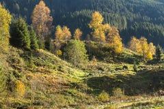 Colores del otoño en las montañas Imágenes de archivo libres de regalías