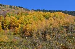 Colores del otoño en los bosques mezclados del parque natural de Posets-Maladeta, español los Pirineos Fotografía de archivo