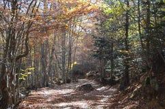 Colores del otoño en los bosques mezclados del parque natural de Posets-Maladeta, español los Pirineos Foto de archivo